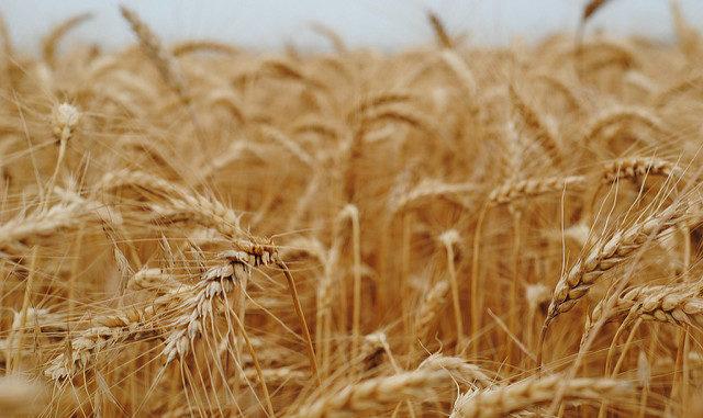 Benefits of grains